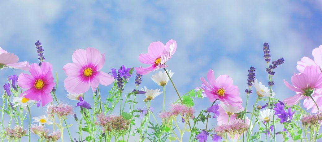 世界の活動から得た人生哲学と奇跡のセオリー(5)「美しい花のように」