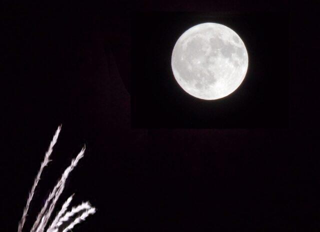 月を愛でる